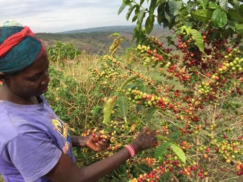 Rwanda Coffee Course at Origin