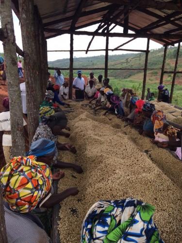 Rwanda Coffee Trip to Origin