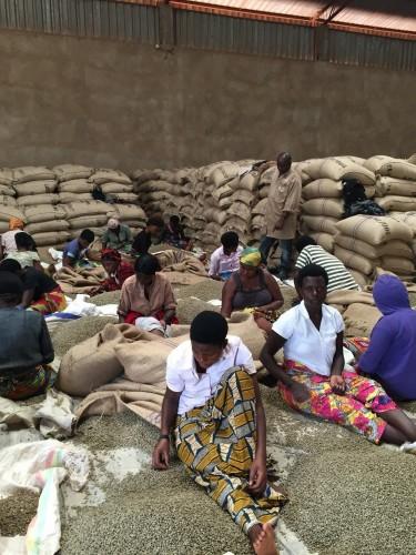 Coffee Course at origin Rwanda